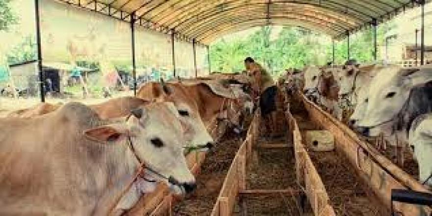 Image : 15 Contoh Ternak Hewan yang Paling Menguntungkan di Lahan Sempit