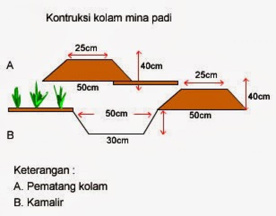 Image : Sistem Budi Daya Mina Padi