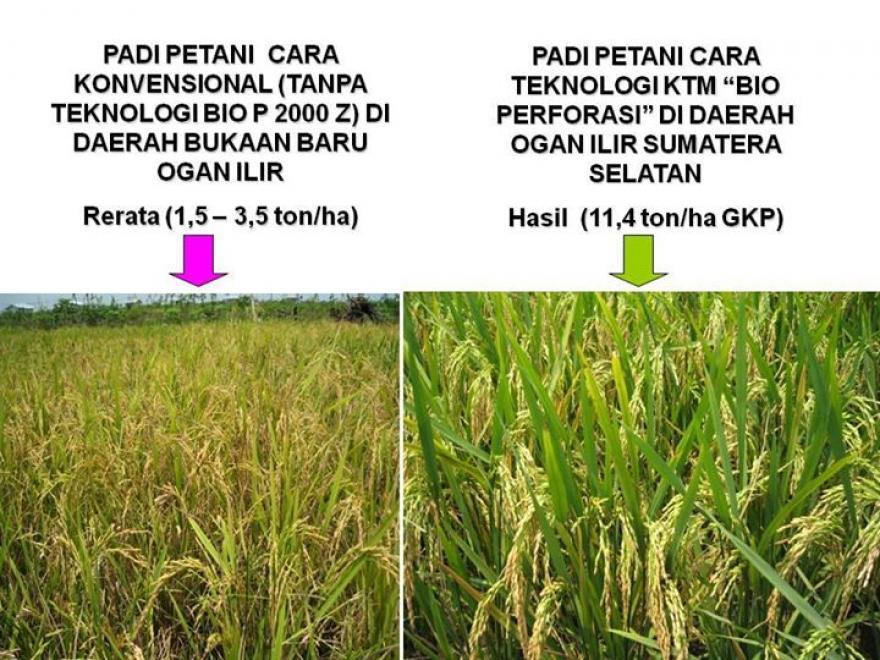 Image : Pertarungan Teknologi Pertanian Dunia (Kimia VS Organik)